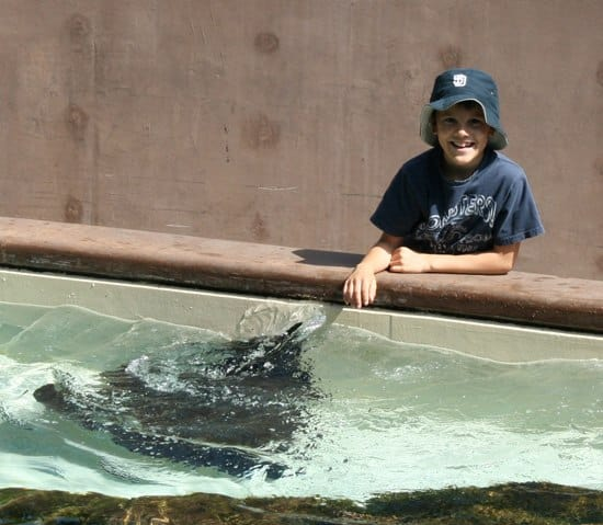 Touch manta rays at Sea World San Diego
