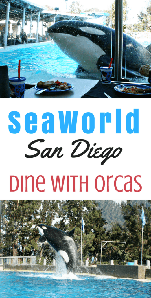 Dine With Orcas at SeaWorld San Diego for a unique experience and amazing buffet meal, poolside next to killer whales. Find out the details on this meal experience, including where to get tickets & what's included.