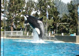 Dine With Orcas at SeaWorld San Diego for a unique experience and amazing buffet meal, poolside next to killer whales.