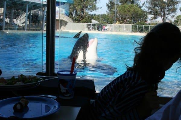 Dine with Shamu at SeaWorld San Diego