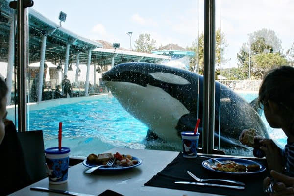 Dining with Shamu at SeaWorld San Diego