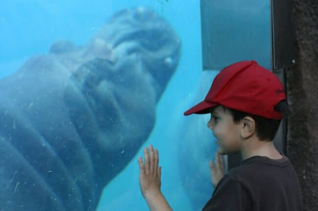 Visiting the San Diego Zoo with kids? Read this ultimate guide on what to do and see, what's new at the Zoo, how to navigate and where to purchase discounted tickets for the San Diego Zoo.