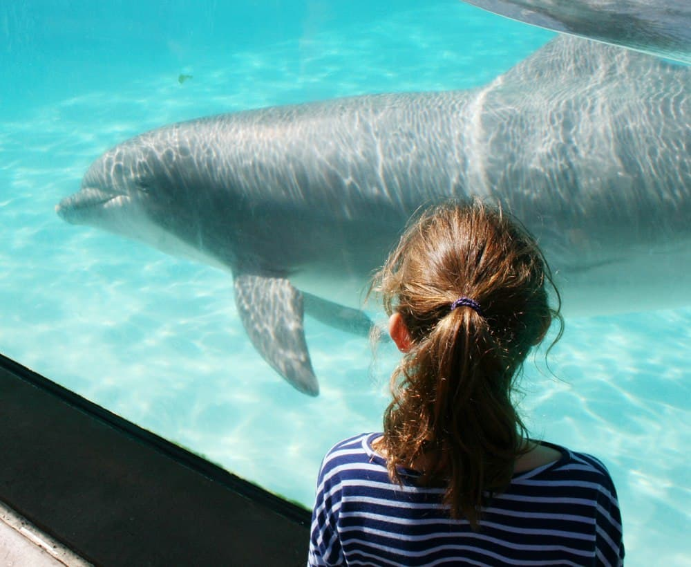 Find out where you can touch and interact with sea life at SeaWorld San Diego including special tours that get you into the water. #SeaWorld #SanDiego