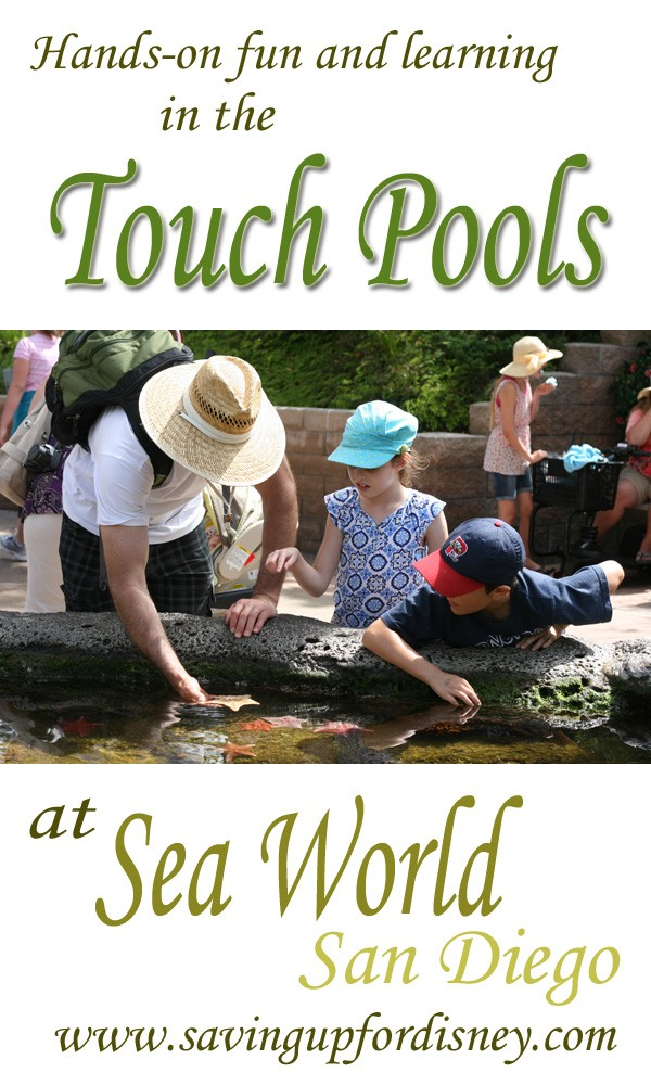 Hands on fun & learning in the touch pools at Sea World San Diego